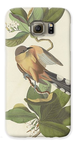 Cuckoo Galaxy S6 Case - Mangrove Cuckoo by Dreyer Wildlife Print Collections