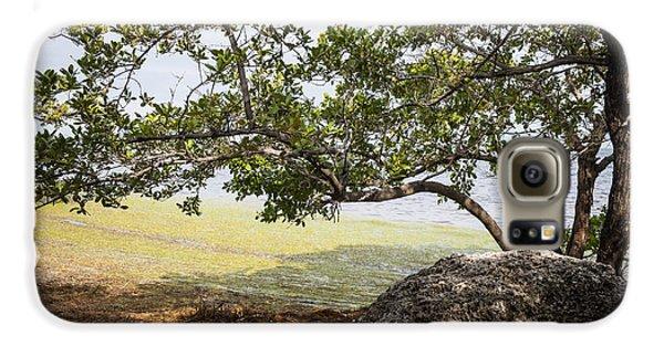 Mangrove Galaxy S6 Case - Mangrove Forest by Elena Elisseeva