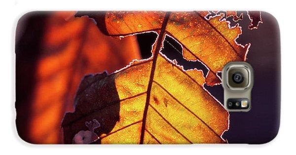 Maron Galaxy S6 Case