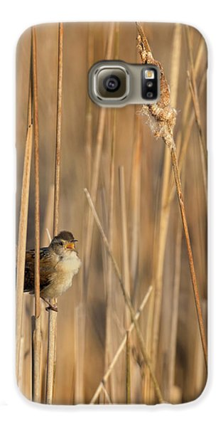 Marsh Wren Galaxy S6 Case by Bill Wakeley
