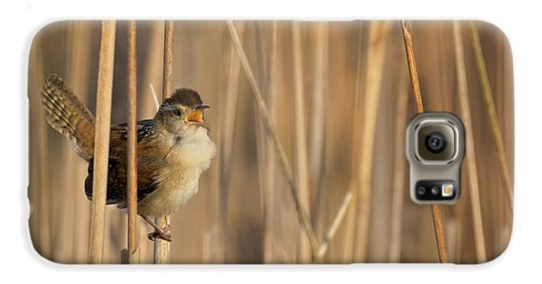 Marsh Wren Square Galaxy S6 Case by Bill Wakeley