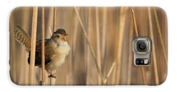 Marsh Wren Square Galaxy S6 Case
