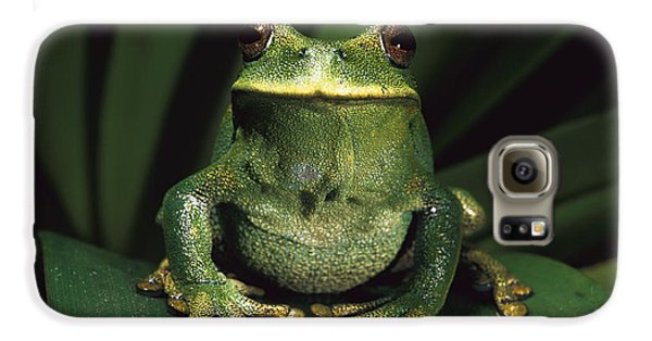 Marsupial Frog Gastrotheca Orophylax Galaxy S6 Case by Pete Oxford