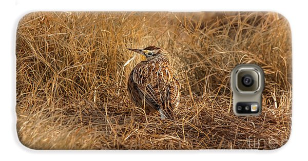 Meadowlark Hiding In Grass Galaxy S6 Case by Robert Frederick