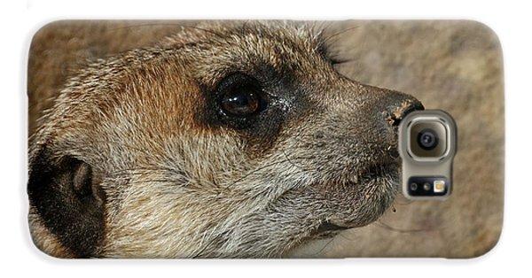 Meerkat 3 Galaxy S6 Case by Ernie Echols