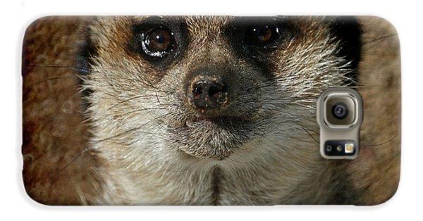 Meerkat 4 Galaxy S6 Case by Ernie Echols