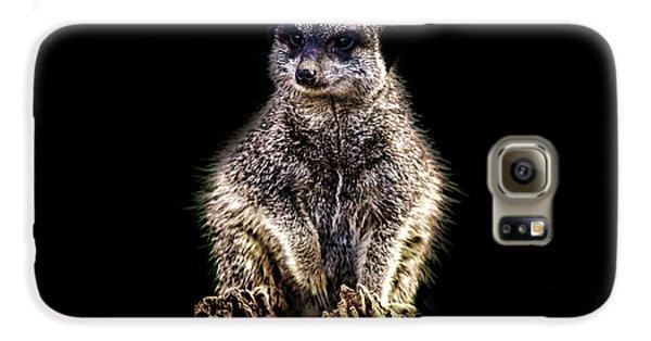 Meerkat Galaxy S6 Case - Meerkat Lookout by Martin Newman