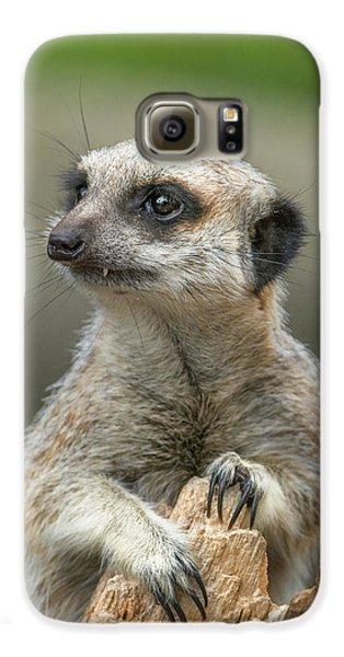 Meerkat Galaxy S6 Case - Meerkat Model by Racheal  Christian
