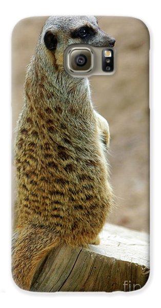 Meerkat Galaxy S6 Case - Meerkat Portrait by Carlos Caetano