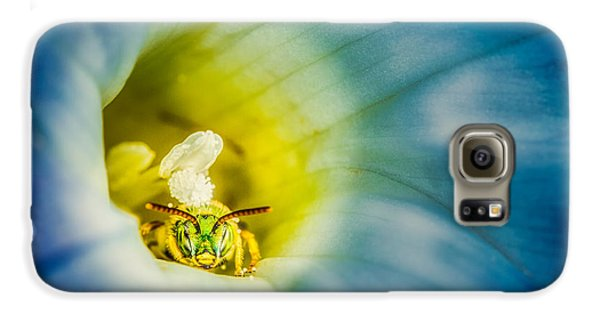 Metallic Green Bee In Blue Morning Glory Galaxy S6 Case