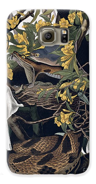 Mocking Birds And Rattlesnake Galaxy S6 Case by John James Audubon