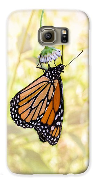 Monarch Butterfly Hanging On Wildflower Galaxy S6 Case