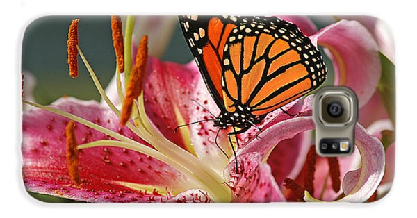 Lily Galaxy S6 Case - Monarch On A Stargazer Lily by Cindi Ressler