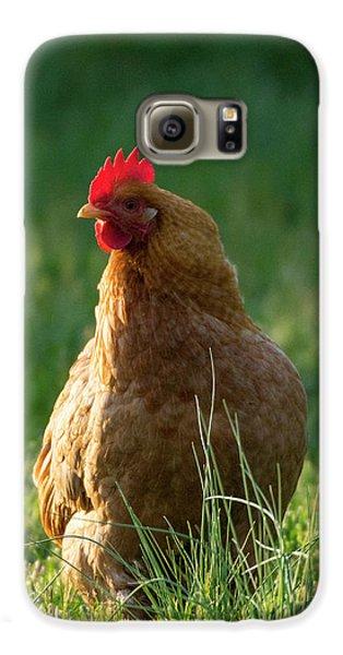 Morning Chicken Galaxy S6 Case