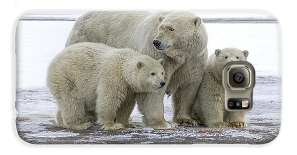 Mother And Cubs In The Arctic Galaxy S6 Case