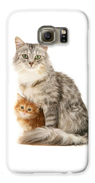 Mother Cat And Ginger Kitten Galaxy S6 Case