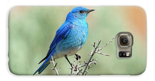 Mountain Bluebird Beauty Galaxy S6 Case by Mike Dawson