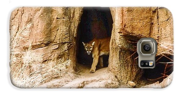 Mountain Lion In The Desert Galaxy S6 Case