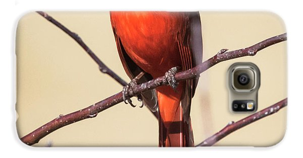 Northern Cardinal Profile Galaxy S6 Case