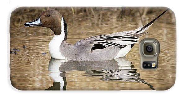 Northern Pintail Drake Galaxy S6 Case
