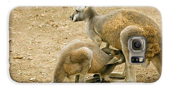 Kangaroo Galaxy S6 Case - Nursing Time by Mike  Dawson