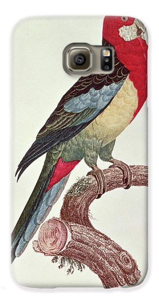Macaw Galaxy S6 Case - Omnicolored Parakeet by Jacques Barraband