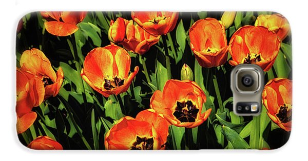Tulip Galaxy S6 Case - Open Wide - Tulips On Display by Tom Mc Nemar