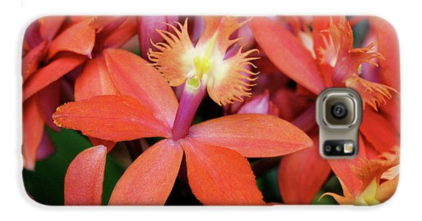 Orange Pink Epidendrum Orchid Galaxy S6 Case