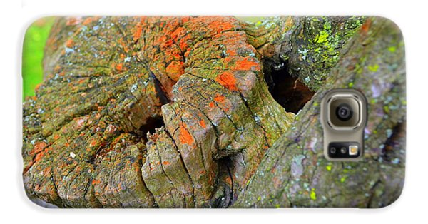 Orange Tree Stump Galaxy S6 Case