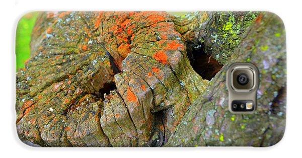 Orange Tree Stump Galaxy S6 Case