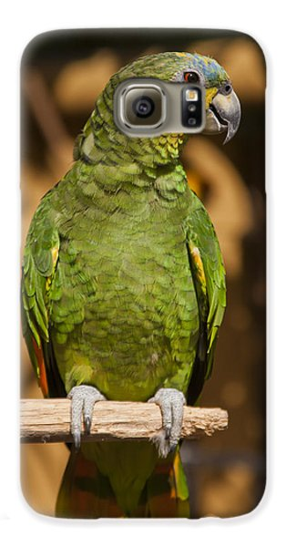 Macaw Galaxy S6 Case - Orange-winged Amazon Parrot by Adam Romanowicz