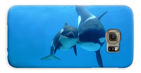 Orca Orcinus Orca Mother And Newborn Galaxy S6 Case by Hiroya Minakuchi