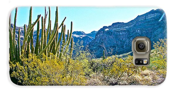 Organ Pipe Cactus In Arch Canyon In Organ Pipe Cactus National Monument-arizona  Galaxy S6 Case by Ruth Hager
