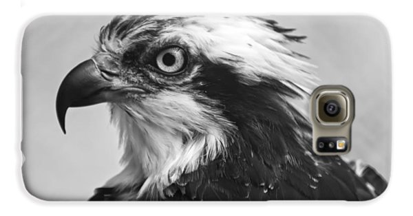 Osprey Monochrome Portrait Galaxy S6 Case