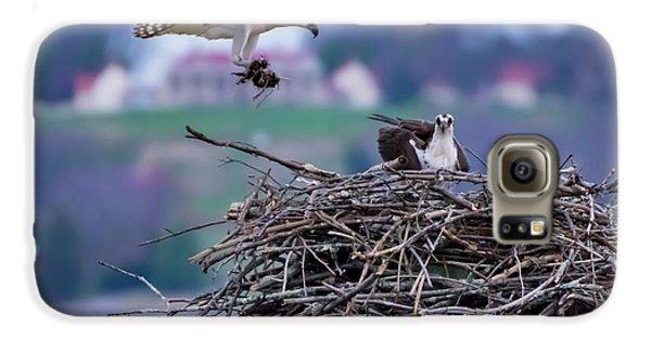 Osprey Nest Building Galaxy S6 Case