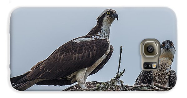 Osprey On A Nest Galaxy S6 Case by Paul Freidlund