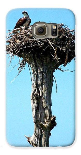 Osprey Point Galaxy S6 Case by Karen Wiles