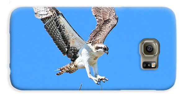 Ospreys Learning To Fly Galaxy S6 Case