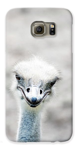 Ostrich Galaxy S6 Case by Lauren Mancke