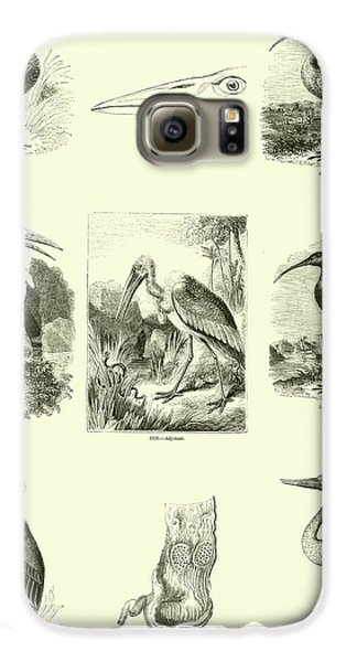 Page From The Pictorial Museum Of Animated Nature  Galaxy S6 Case by English School