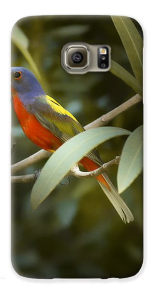Painted Bunting Male Galaxy S6 Case by Phill Doherty