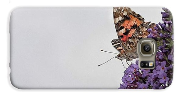 Painted Lady (vanessa Cardui) Galaxy S6 Case by John Edwards