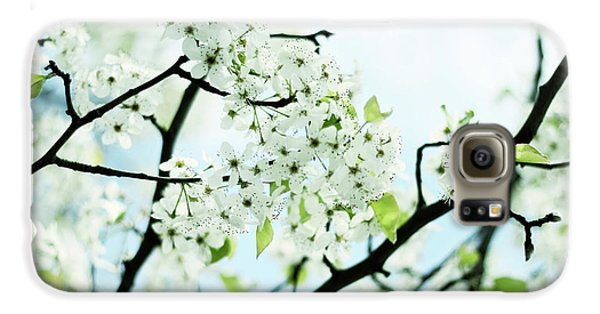 Galaxy S6 Case featuring the photograph Pale Pear Blossom by Jessica Jenney