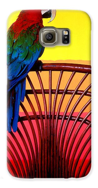 Macaw Galaxy S6 Case - Parrot Sitting On Chair by Garry Gay
