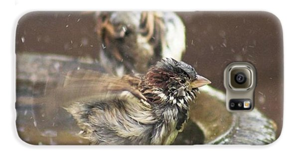 Pass The Towel Please: A House Sparrow Galaxy S6 Case by John Edwards