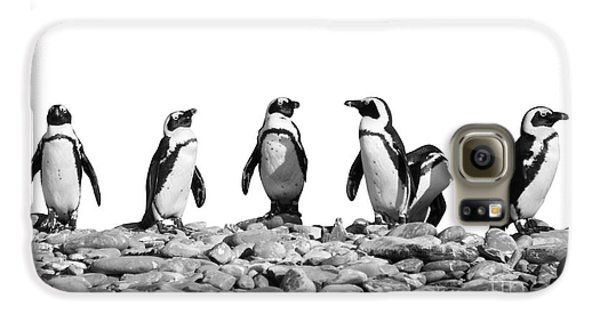 Penguins Galaxy S6 Case by Delphimages Photo Creations