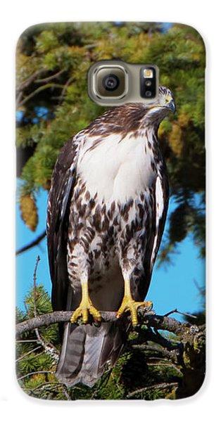 Peregrine Falcon Galaxy S6 Case