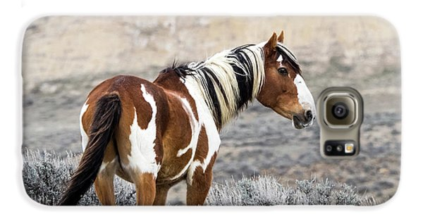 Picasso - Wild Mustang Stallion Of Sand Wash Basin Galaxy S6 Case