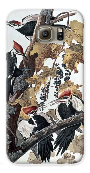 Pileated Woodpeckers Galaxy S6 Case