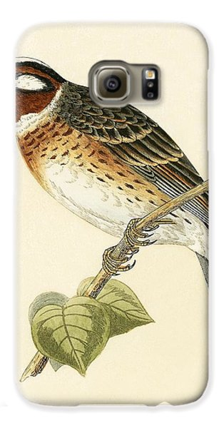 Pine Bunting Galaxy S6 Case